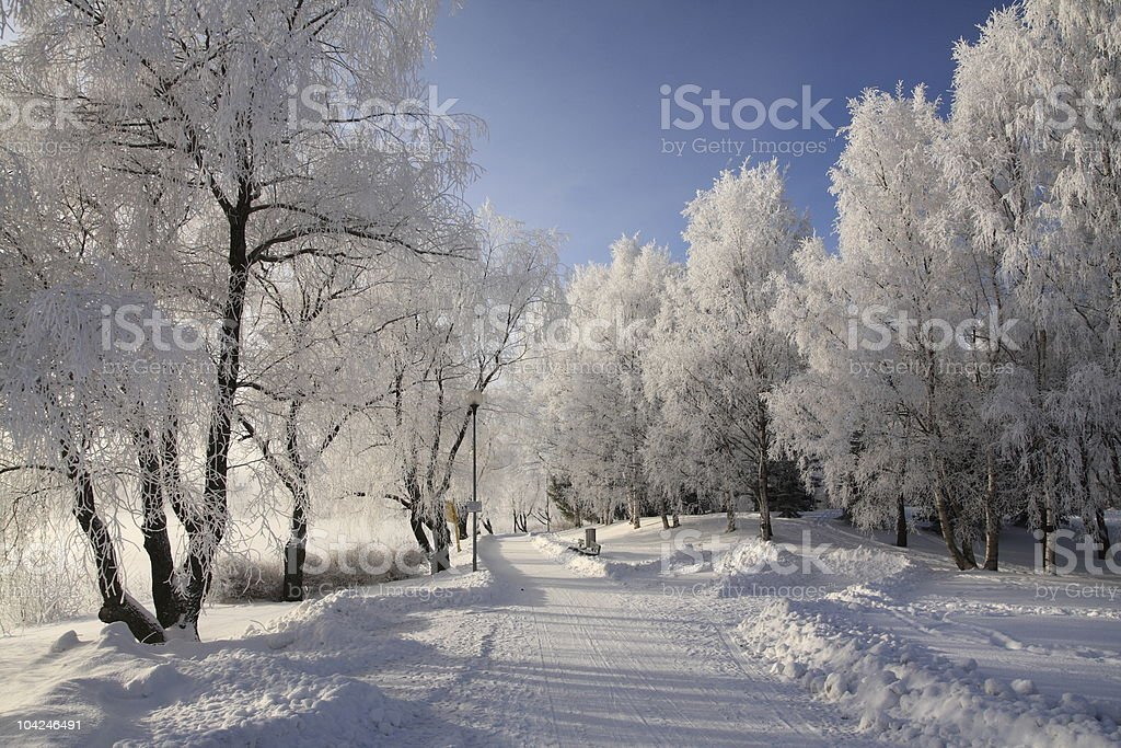 A beautiful snow covered country road royalty-free stock photo