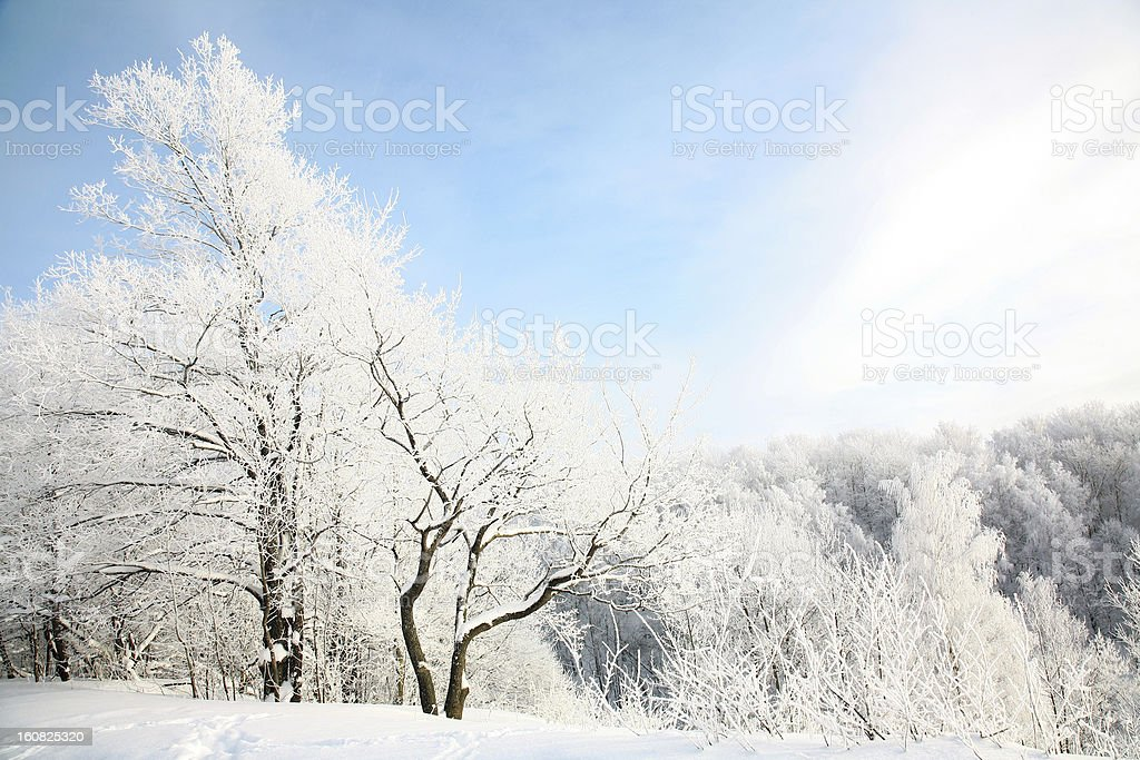 Beautiful snow forest on blue sky background royalty-free stock photo