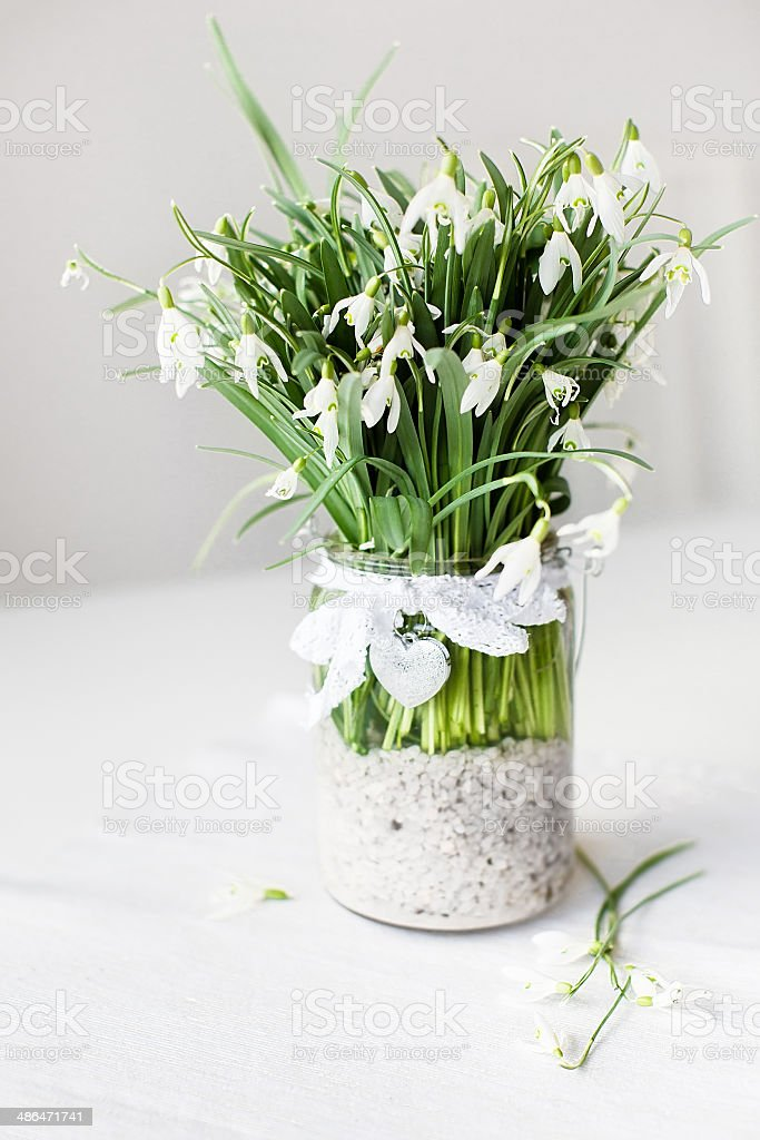Beautiful snowdrop flowers in transparent vase with lace ribbon stock photo