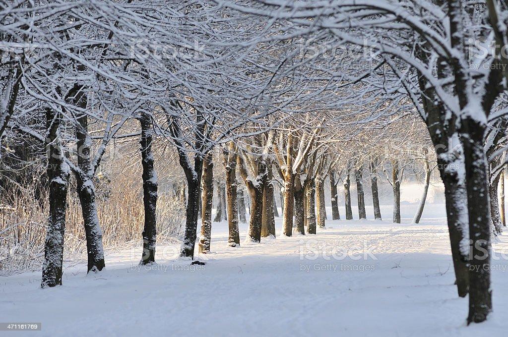 Beautiful snowy park stock photo