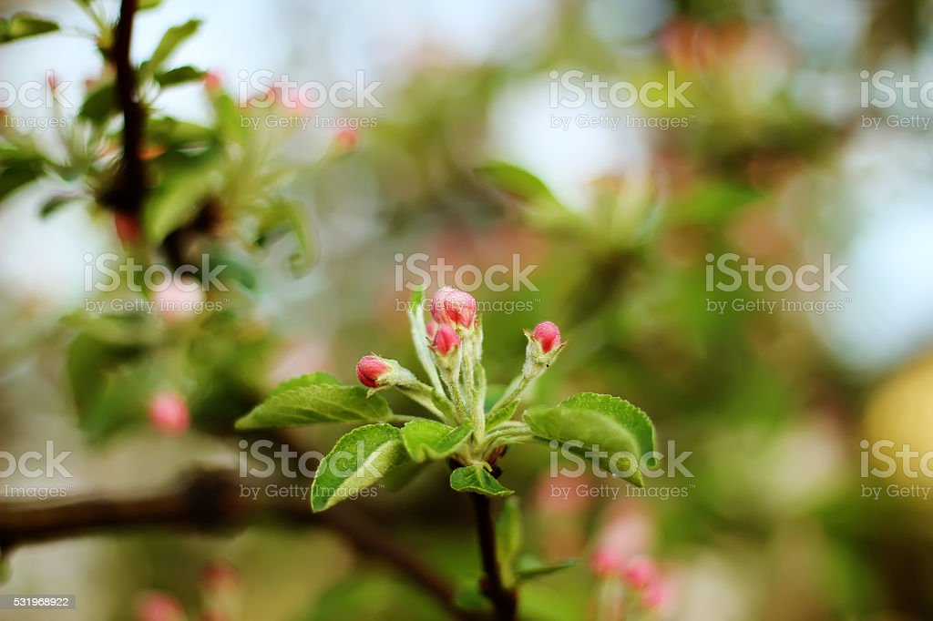 beautiful soft background with blooming flowers on the tree royalty-free stock photo