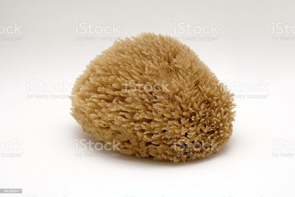 Beautiful softness sea sponge royalty-free stock photo