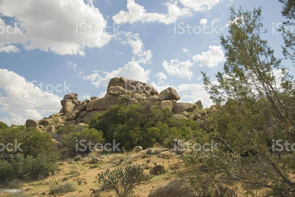 Beautiful Sonoran Desert royalty-free stock photo