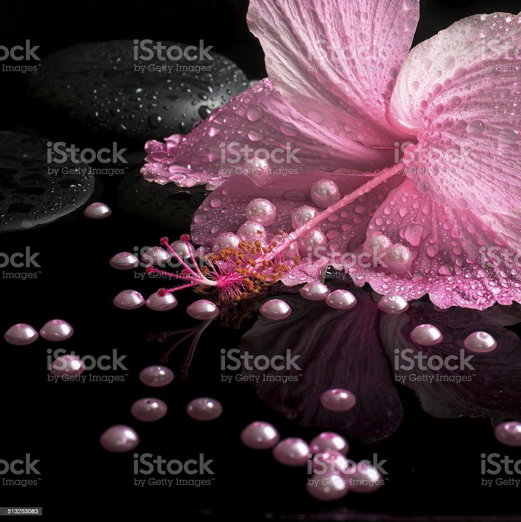 purple hibiscus setting