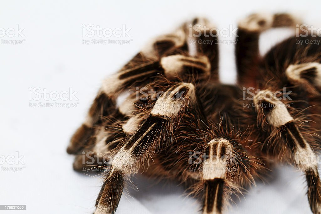 beautiful spider royalty-free stock photo