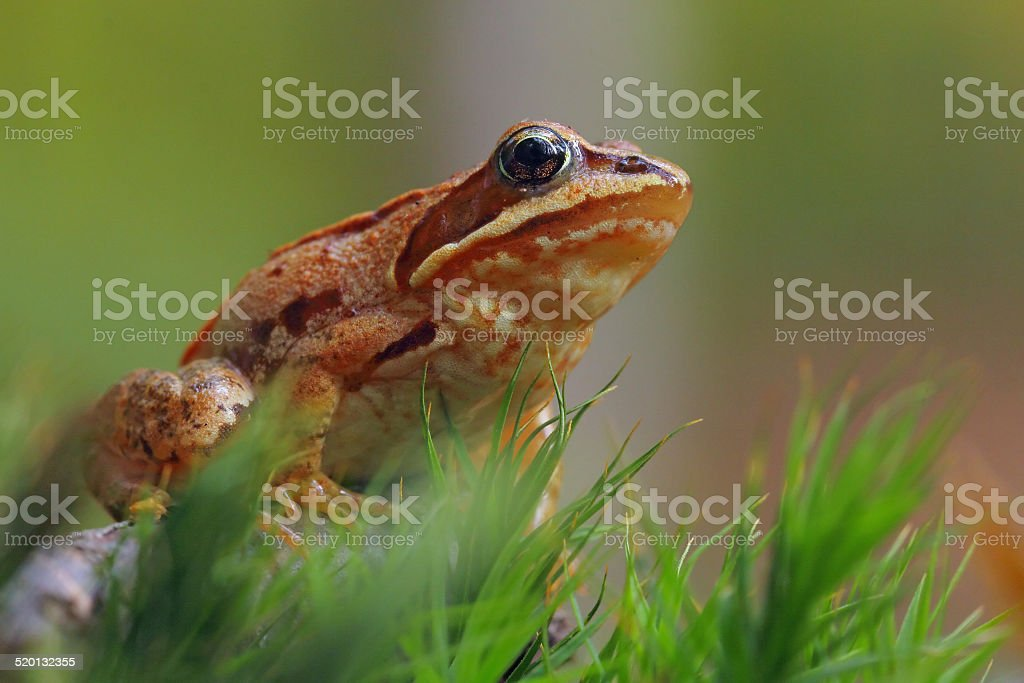Beautiful spotted frog sitting on moss stock photo