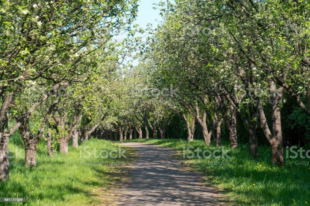 Beautiful Spring Alley in Park stock photo