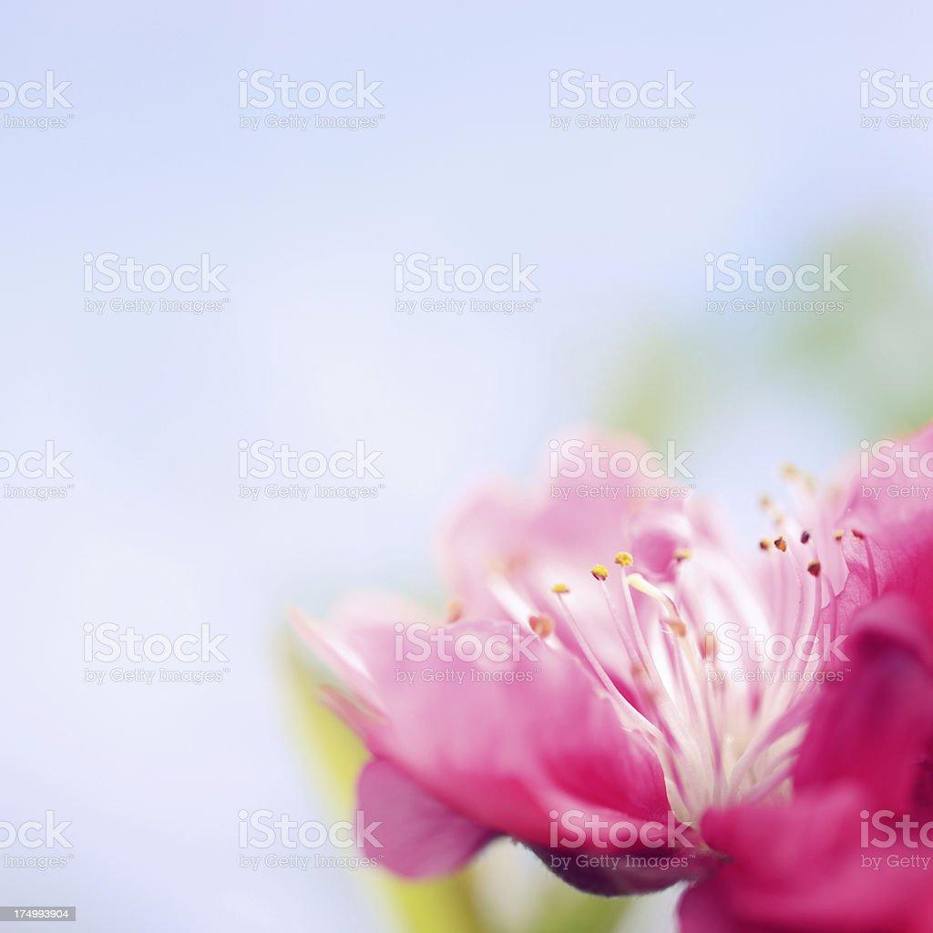 Beautiful spring background royalty-free stock photo