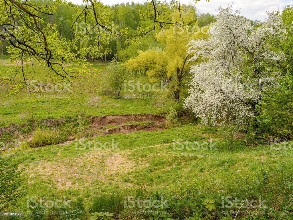 Beautiful spring blossoming apple tree in the ravine by river stock photo