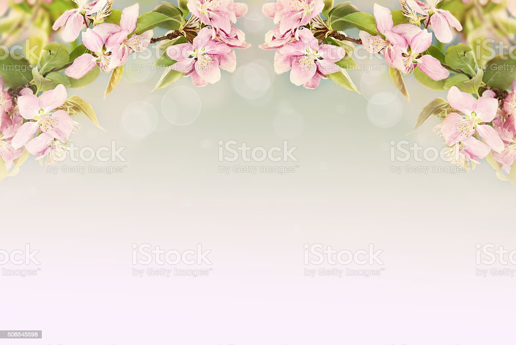 Beautiful Spring Blossoms stock photo