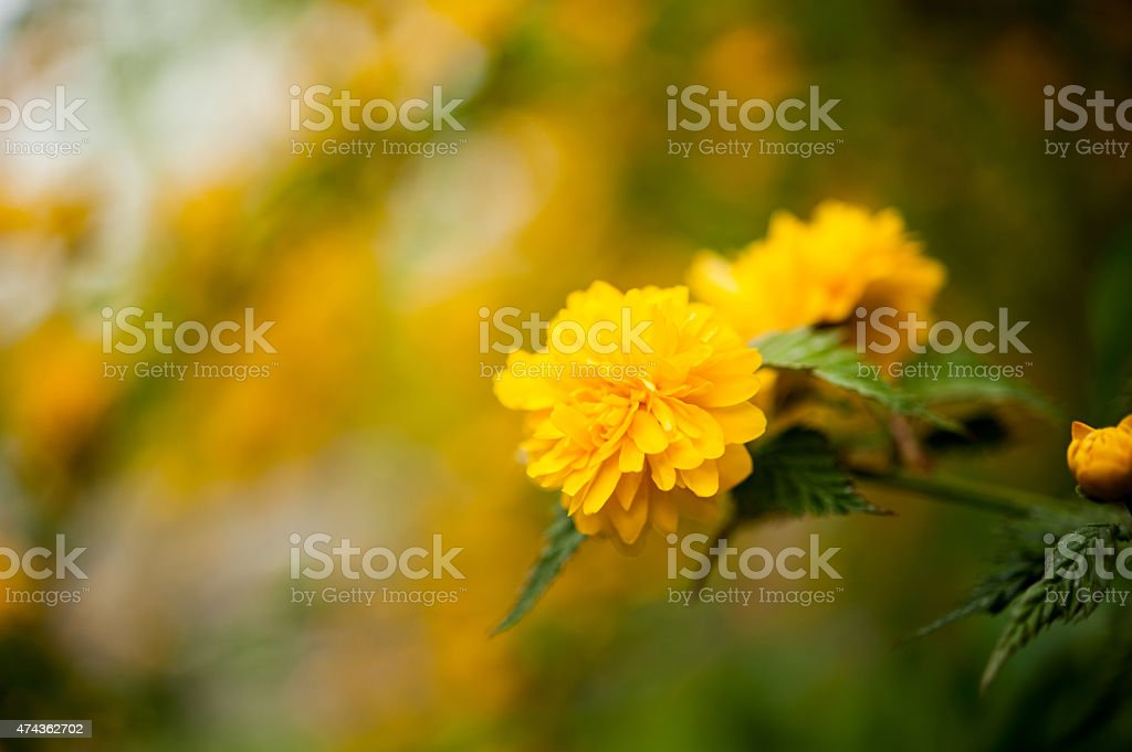Beautiful spring colors stock photo
