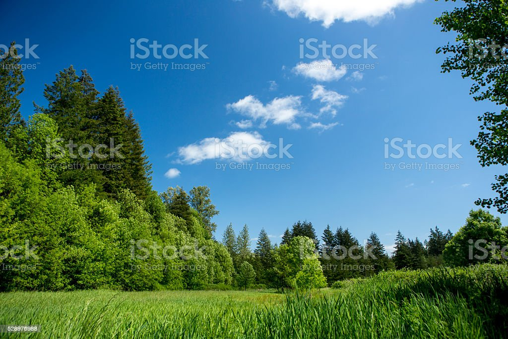 Beautiful Spring Day in Nature stock photo
