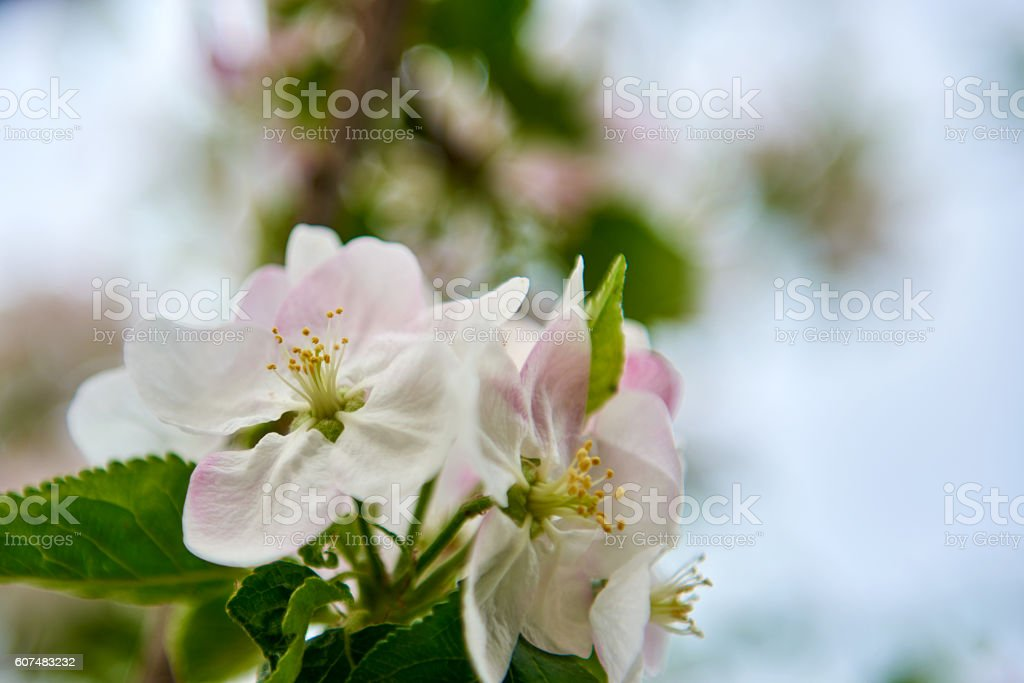 beautiful spring flower stock photo