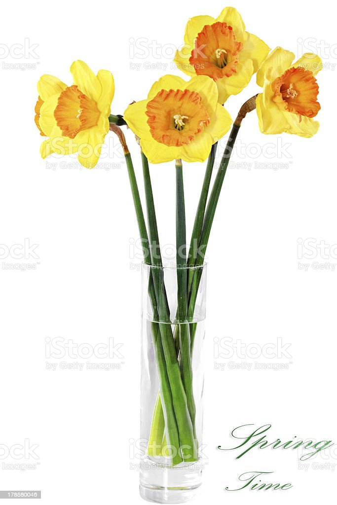 Beautiful spring flowers in vase: orange narcissus (Daffodil) royalty-free stock photo