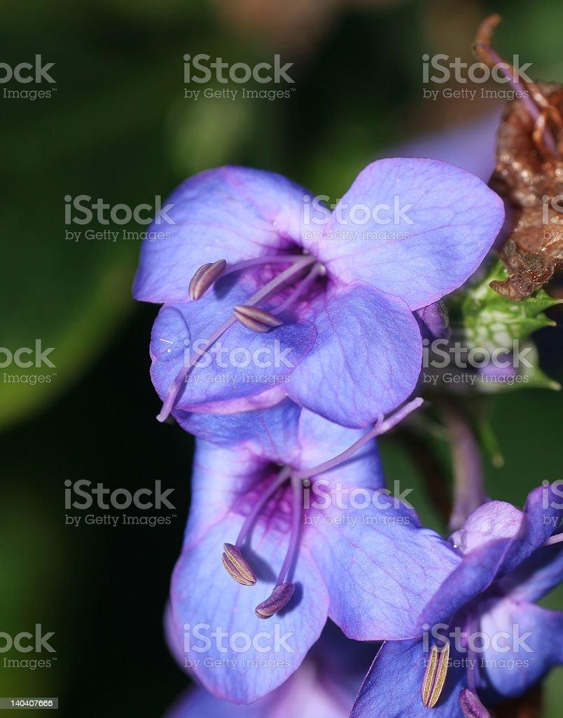 Hermosas flores de primavera foto de stock libre de derechos