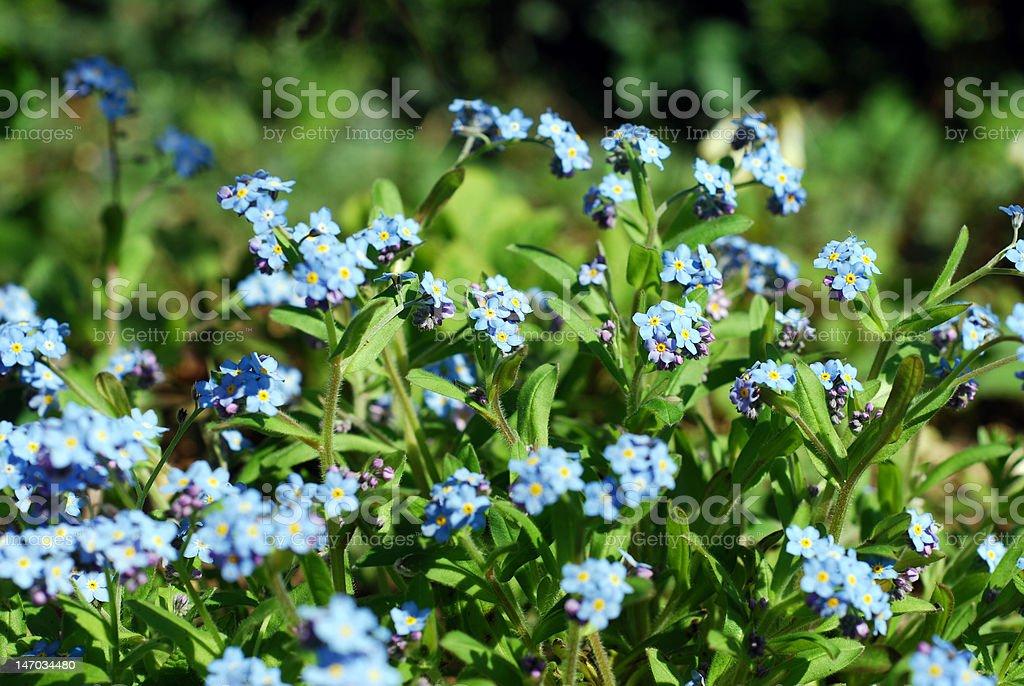 Belas flores da primavera foto royalty-free