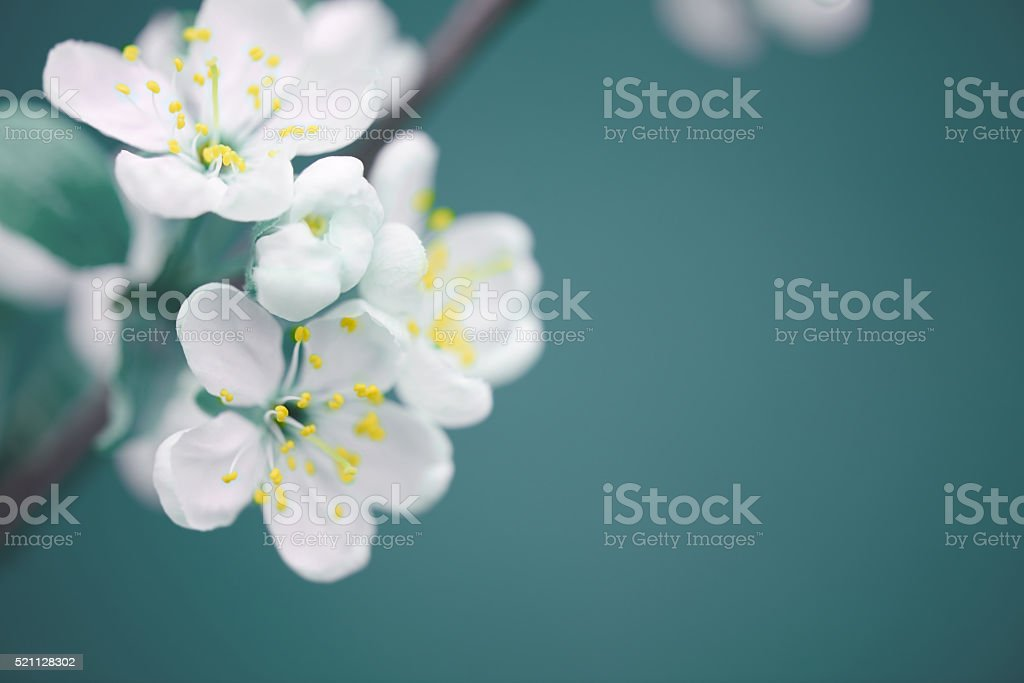 beautiful spring flowers royalty-free stock photo