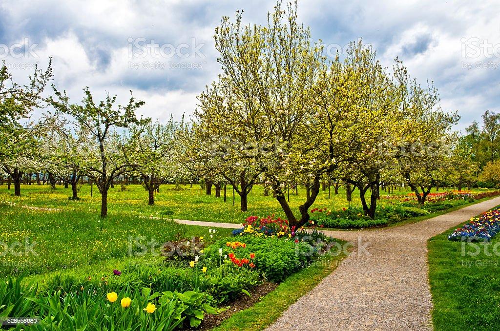 Beautiful Spring garden royalty-free stock photo