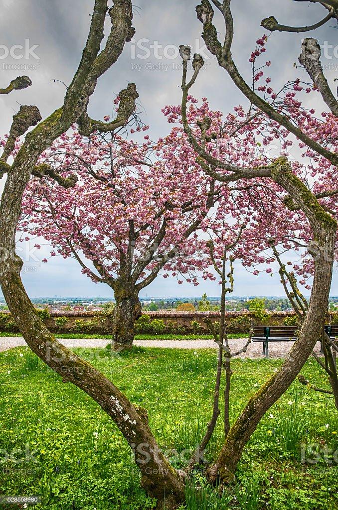 Beautiful Spring garden stock photo