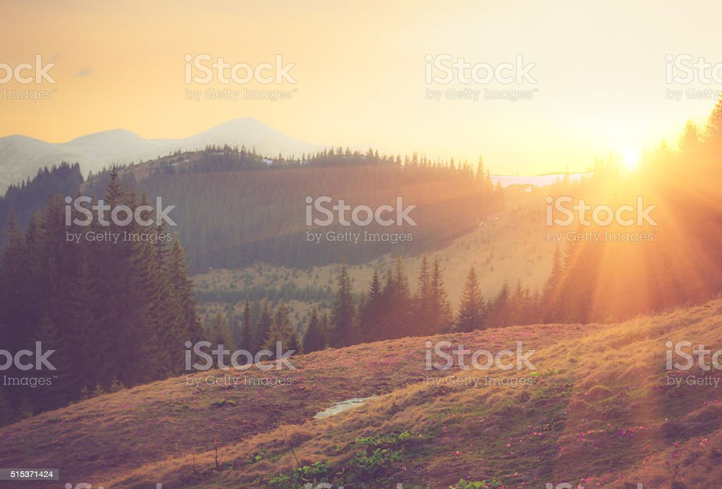 Beautiful spring mountain landscape at sunrise. stock photo