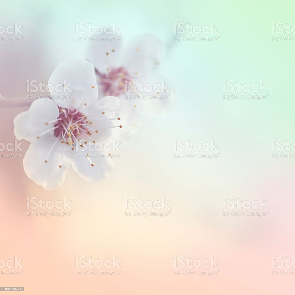 Beautiful spring stock photo