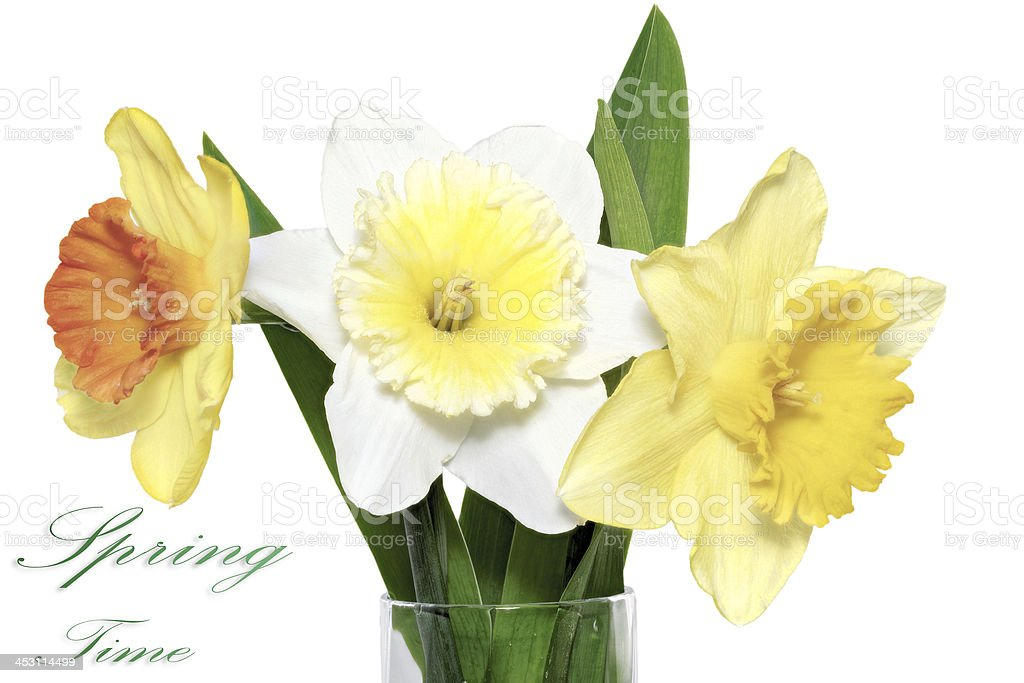 Beautiful spring  three flowers : yellow-white-orange narcissus royalty-free stock photo