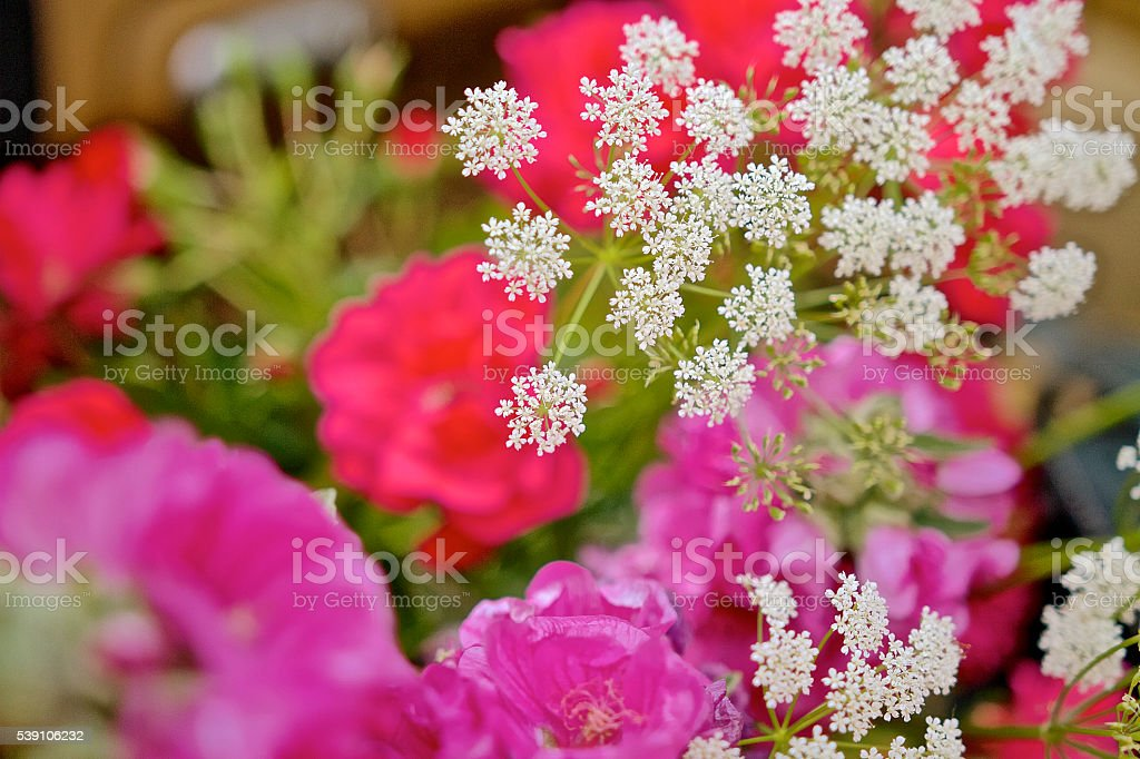 Beautiful Spring,summer colourful flowers stock photo