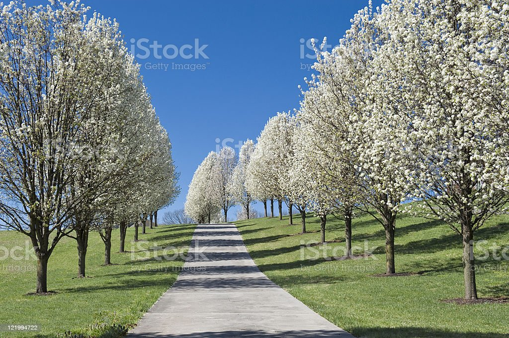 Beautiful Springtime Driveway royalty-free stock photo