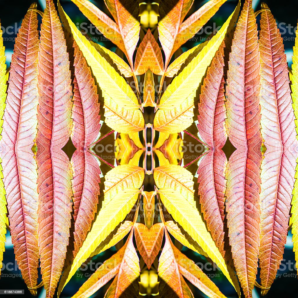 Beautiful Staghorn Sumac leaves bush macro surreal shaped symmetrical kaleidoscope stock photo