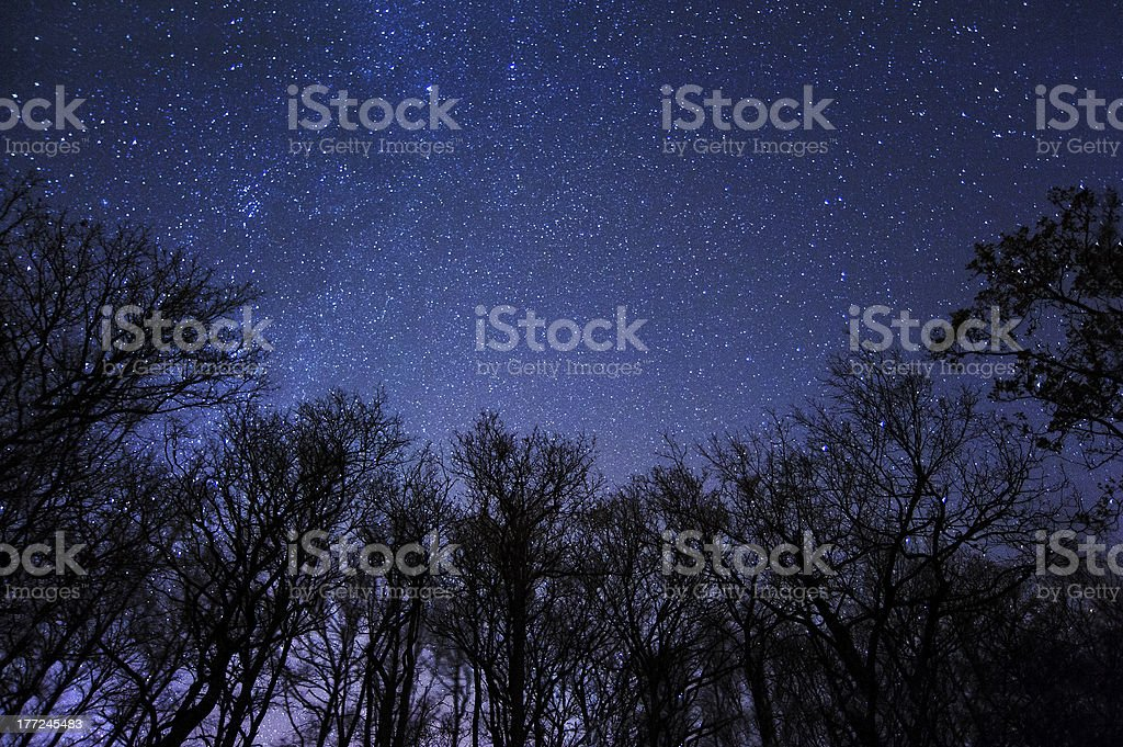 A beautiful starry night in the middle of a forest stock photo