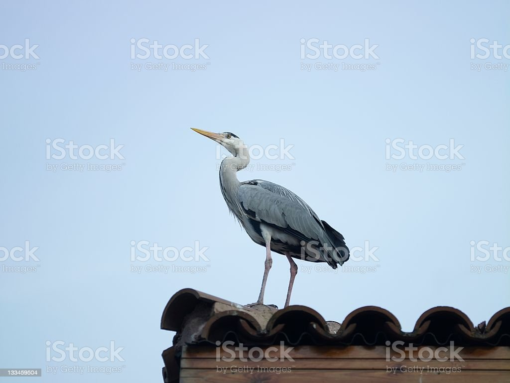 Beautiful stork stand on roof stock photo