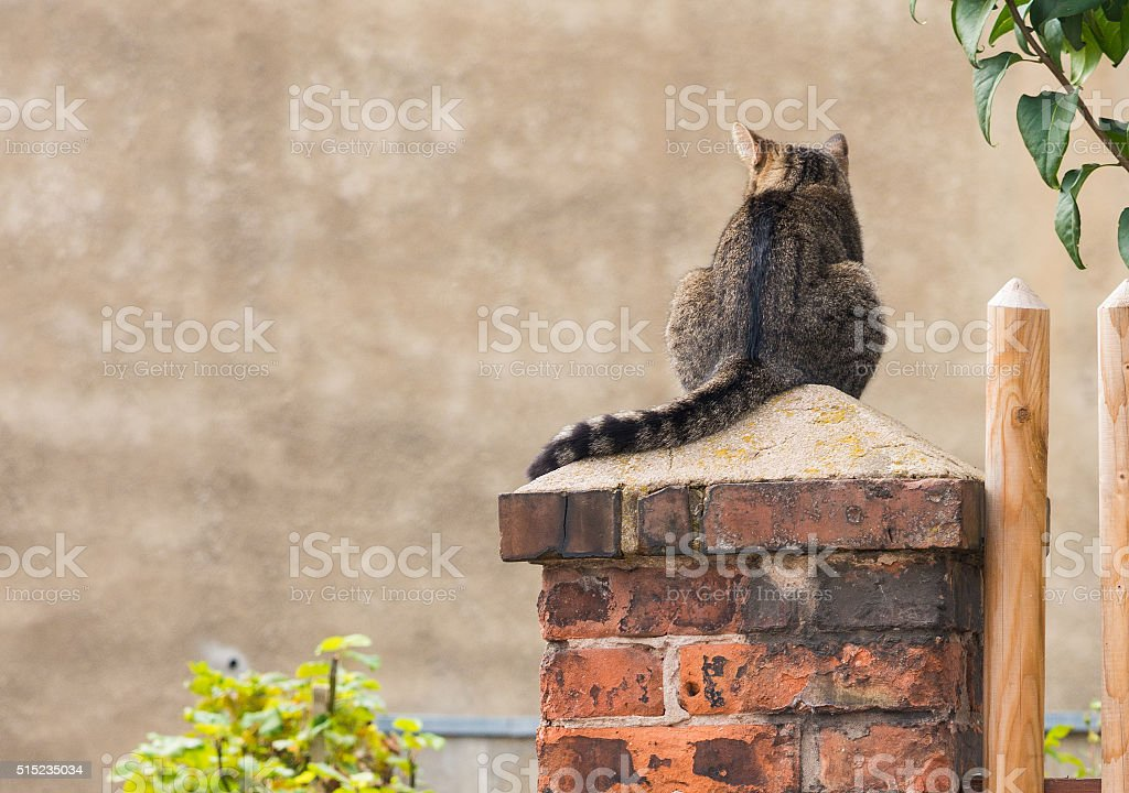 Beautiful stray cat in the street looking curious around stock photo