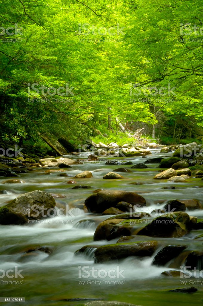 Beautiful Stream in the Great Smoky Mountains at Tremont stock photo