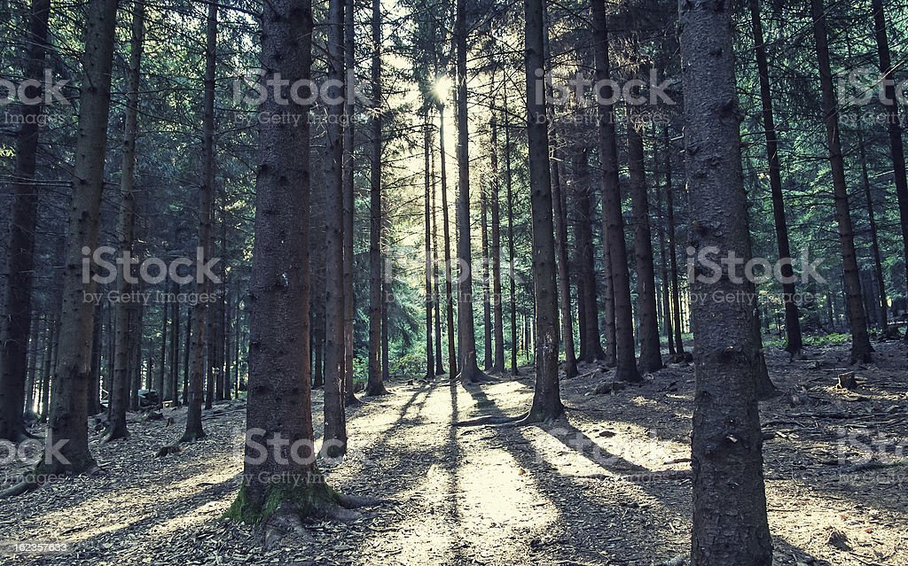 Beautiful strong light shines through a magical forest royalty-free stock photo