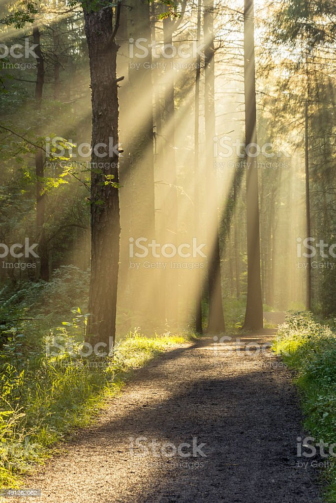 Beautiful Strong Sunbeams Entering Forest Through Trees With Path. stock photo
