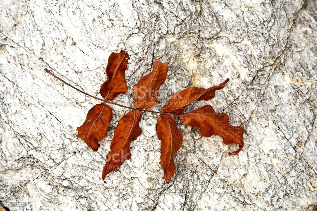 beautiful structured leaves at the beach arranged by nature in a harmonic way stock photo