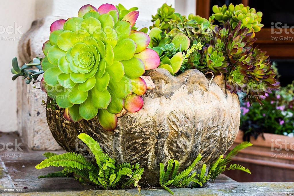 Beautiful succulent arrangement stock photo