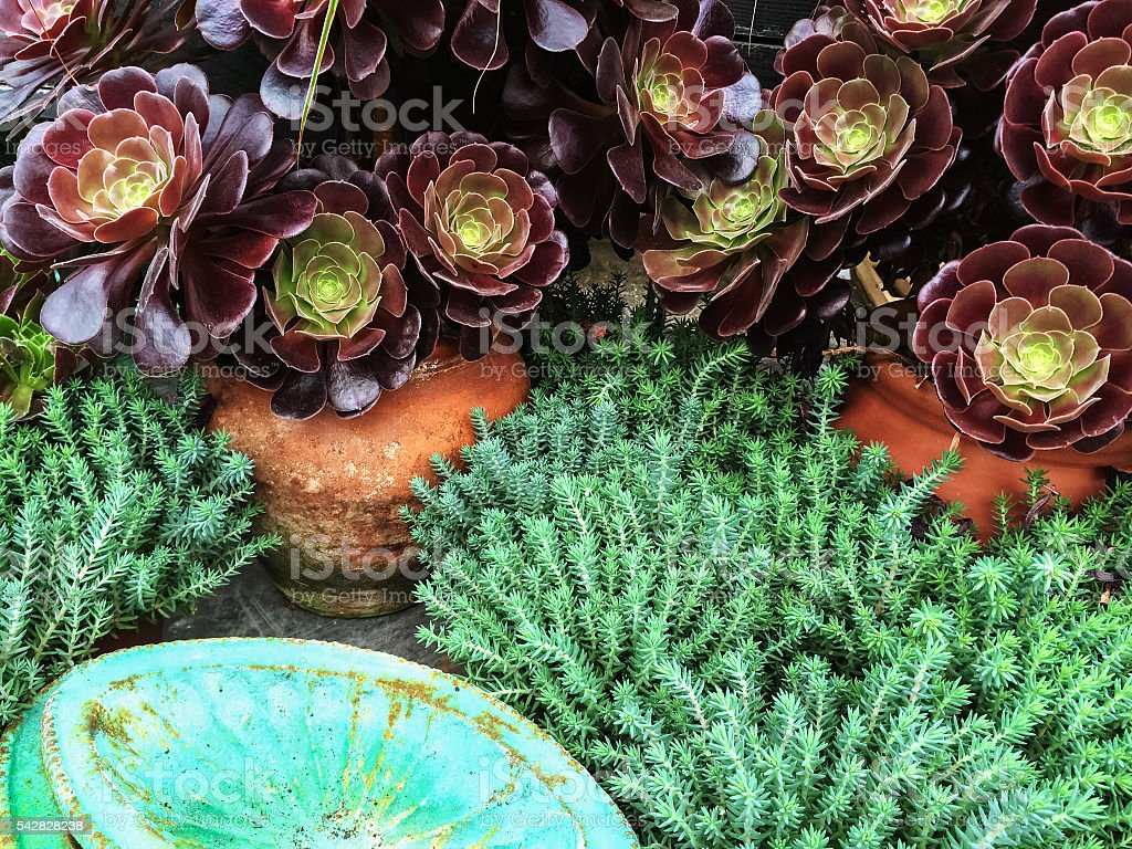 Beautiful succulent plants in clay pots stock photo