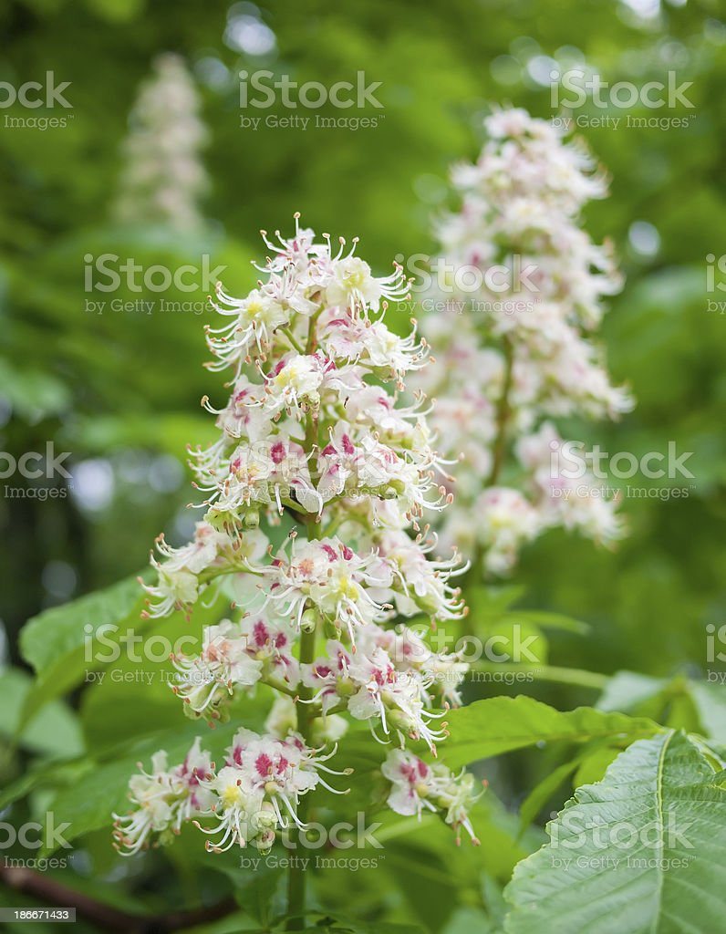 Beautiful summer flowers royalty-free stock photo