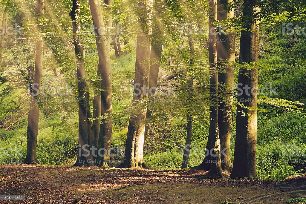 Beautiful summer forest stock photo