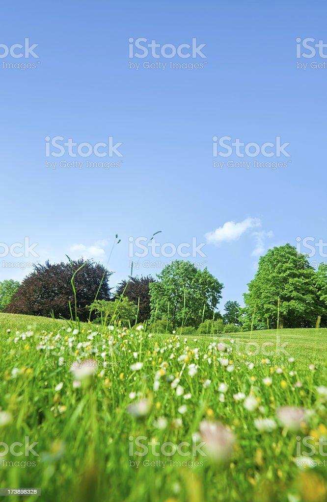 beautiful summer landscape royalty-free stock photo