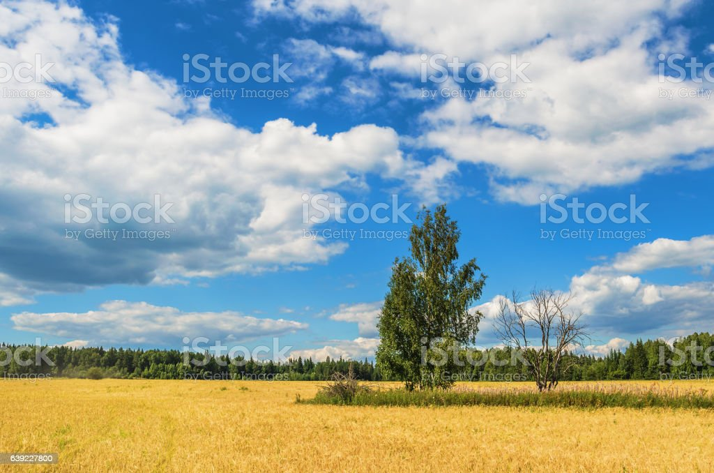 Beautiful summer rural landscape stock photo
