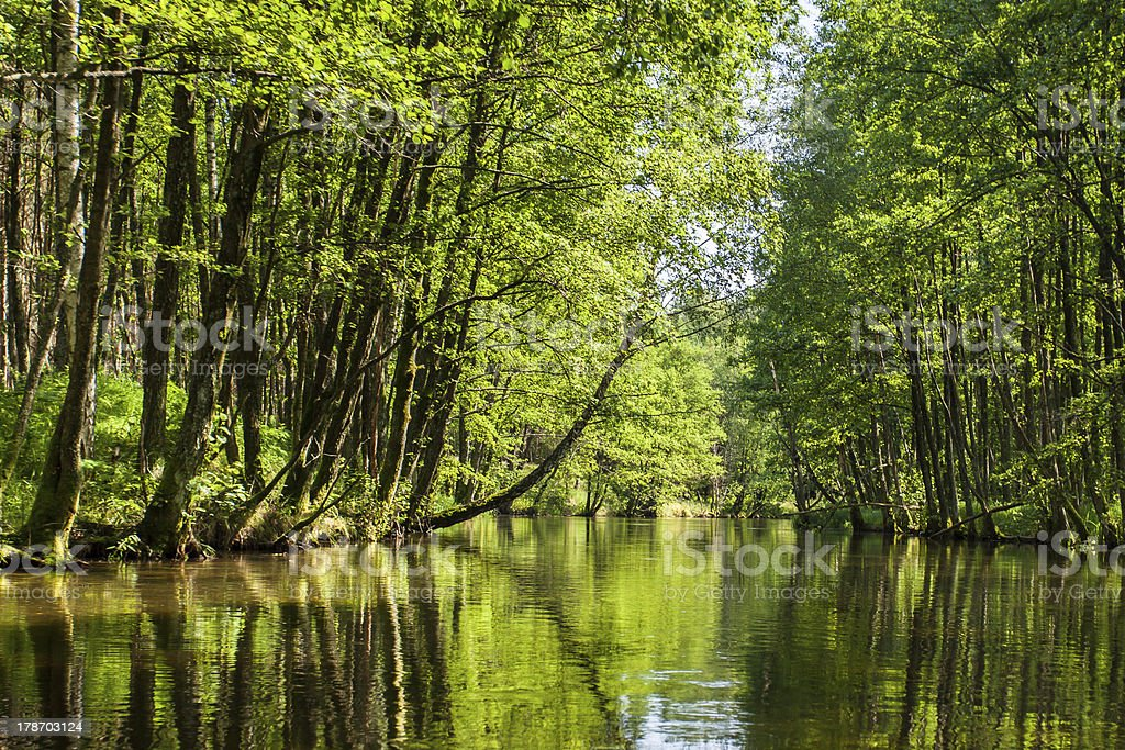 Beautiful summer view of the river in forest stock photo