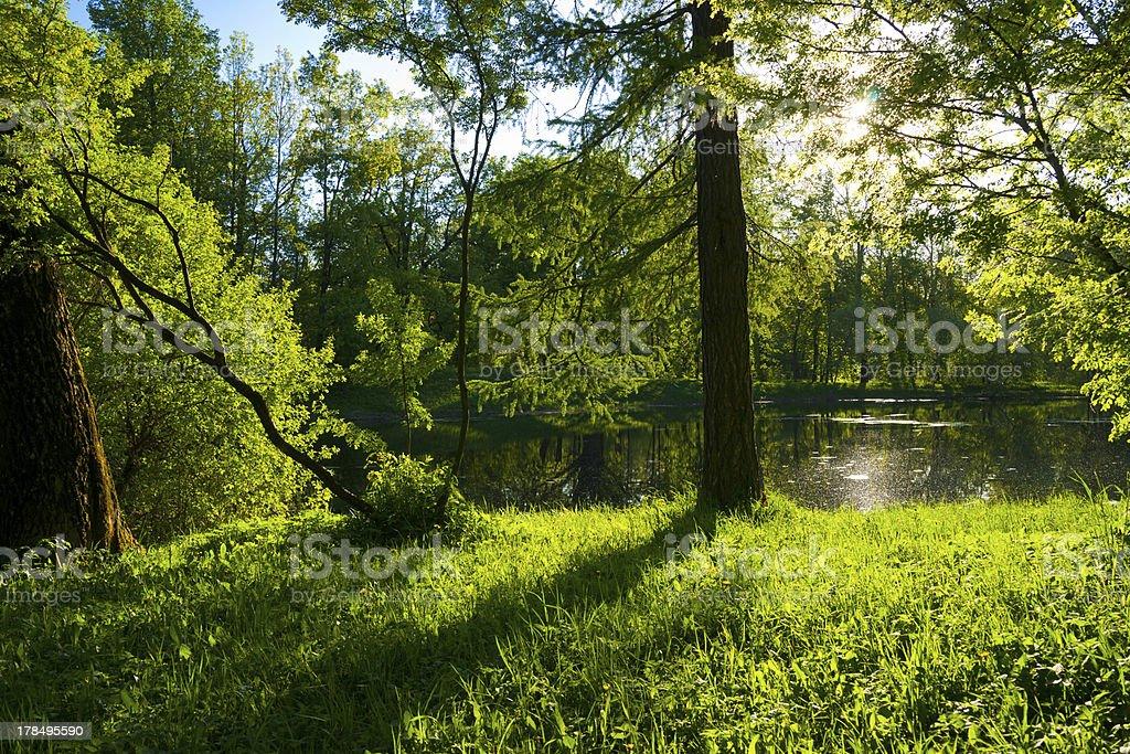 Beautiful summer water landscape in sunbeams royalty-free stock photo
