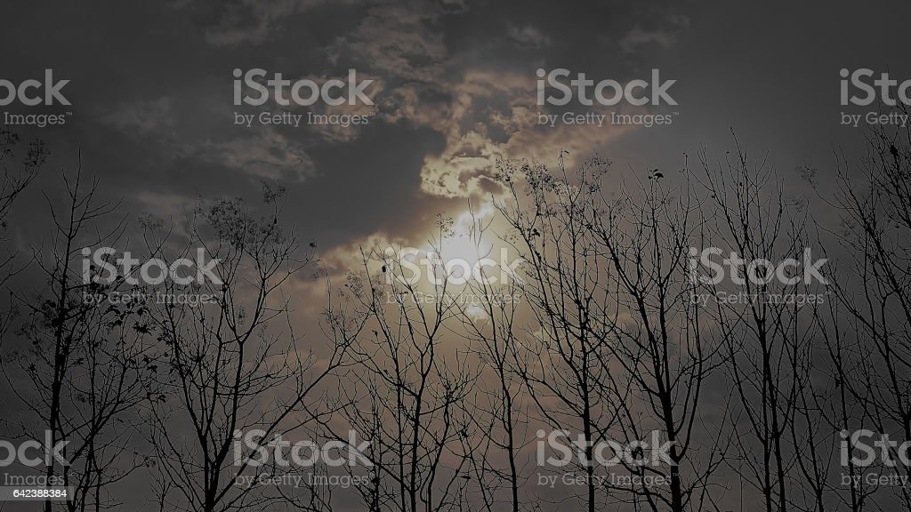 beautiful sunlight texture for background stock photo