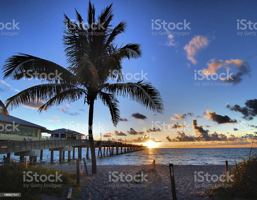 Beautiful sunrise at Dania Pier with palm tree stock photo