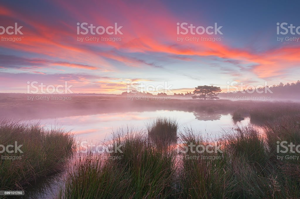 Beautiful Sunrise by a pond in Holland. stock photo