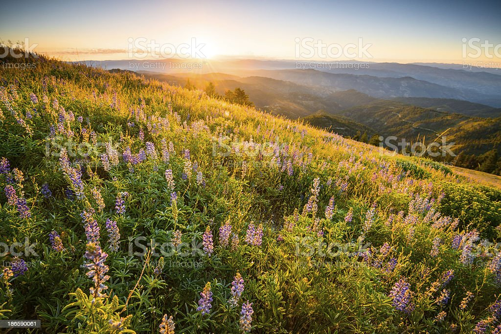 Beautiful sunrise in Idaho mountains stock photo