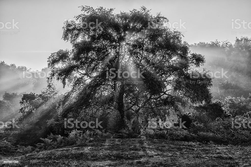 Beautiful sunrise landscape of sun beams shining through tree in stock photo
