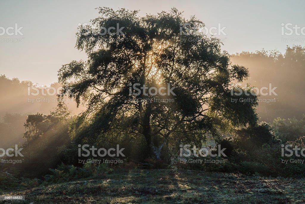 Beautiful sunrise landscape of sun beams shining through tree wi stock photo